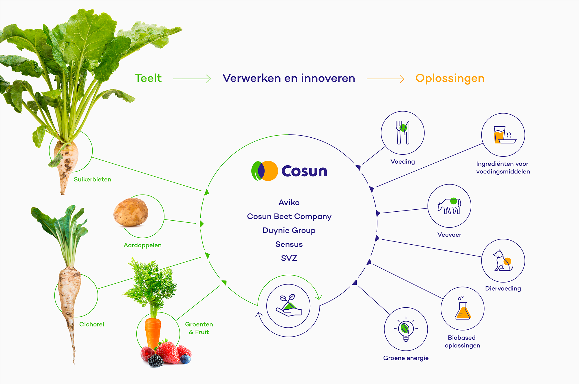 Cosun-website-wardtaal_06_Cosun_Infographic_Tiny